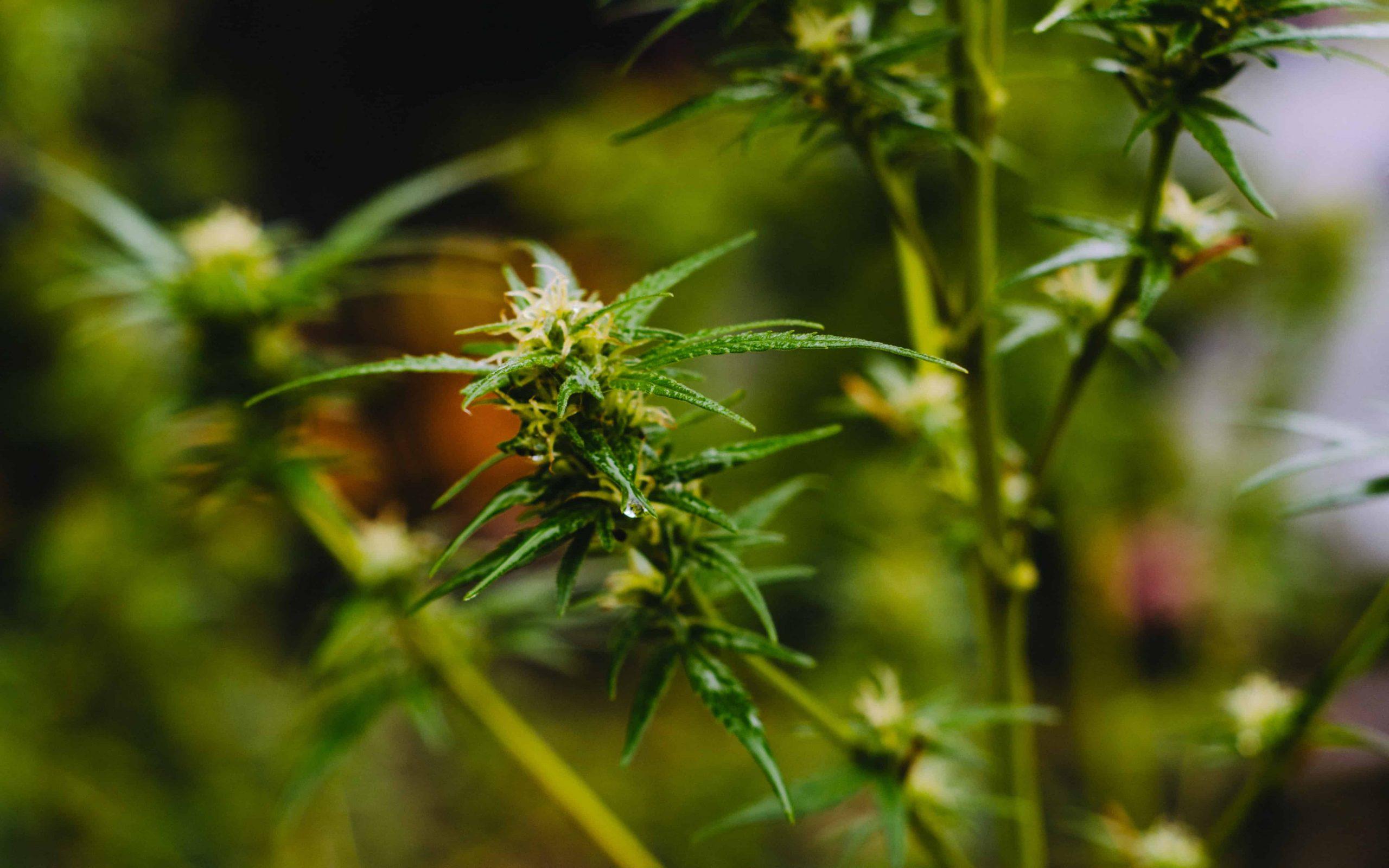 Backen mit Cannabis: Alle Tipps und Tricks